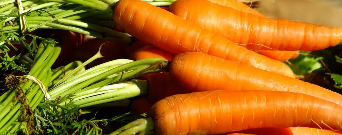 Carrots Superfoods For Your Teeth