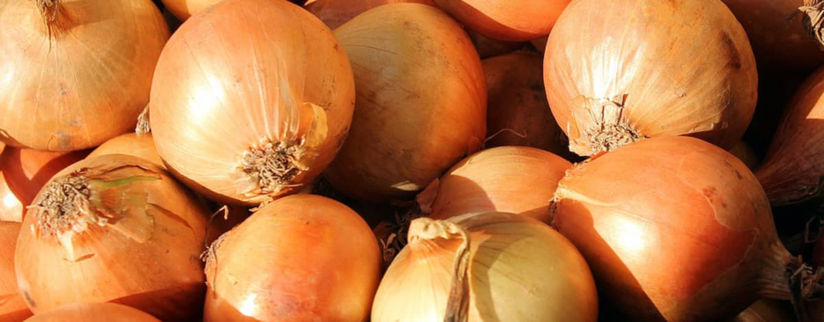 Onion Superfoods For Your Teeth
